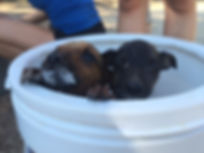 Wild Inside Adventures Veterinary Volunteer Programme Puppies Community Work South Africa