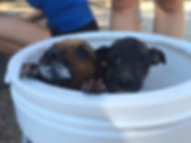 Wild Inside Vet Volunteers South Africa Puppies In A Bucket