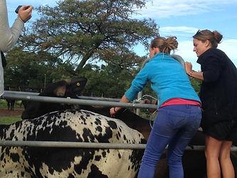 Wild Inside Adventures Veterinary Volunteer Programme South Africa Livestock Agricultural Farmwork Vet students Pre-vet