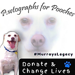 Donate & Change Lives (1).png