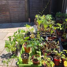 The plant sale!