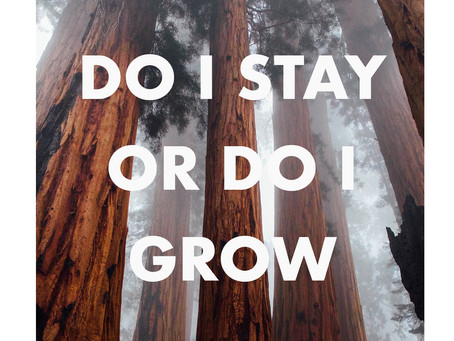 Should I Stay Or Should I Grow