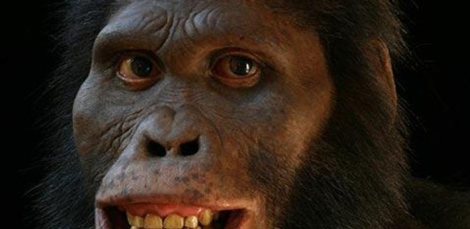 Australopithecus-africanus.jpg