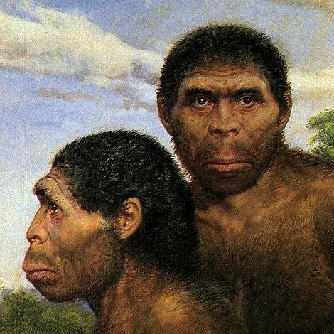 hominidae.jpg