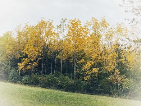 De Samichlaus gnüsst de Herbst