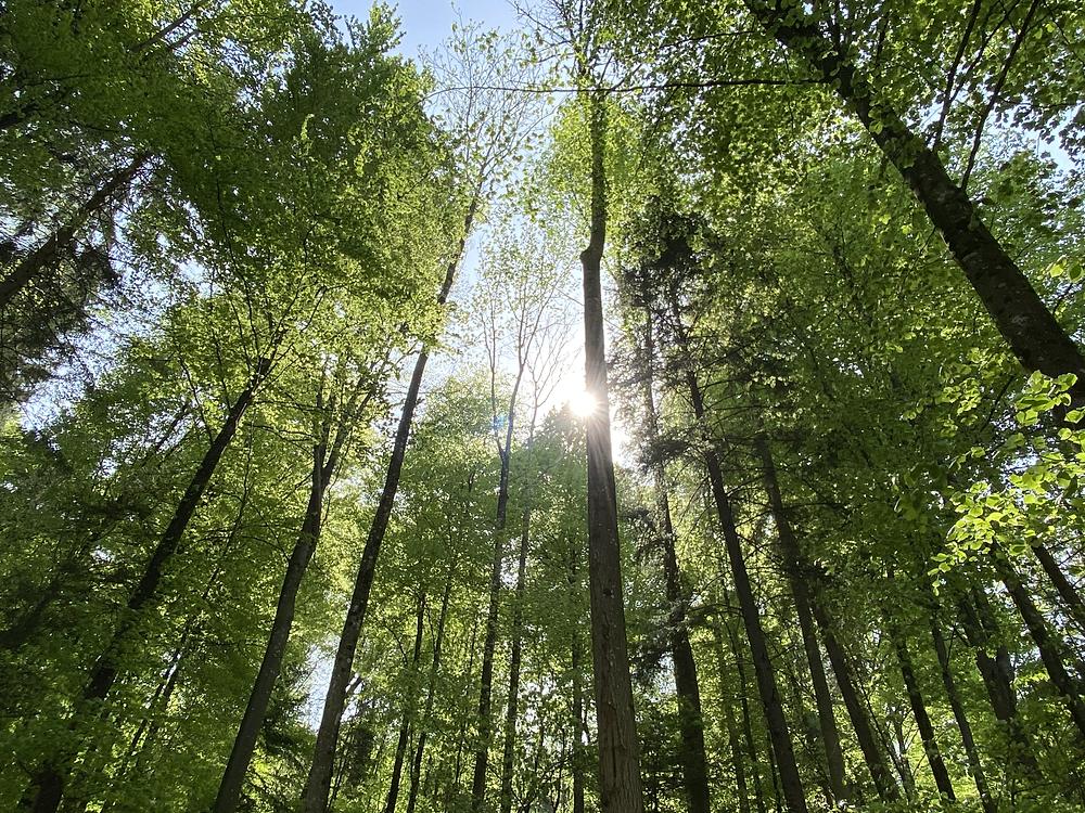 DieSchnitzeljagd Wald Aargau