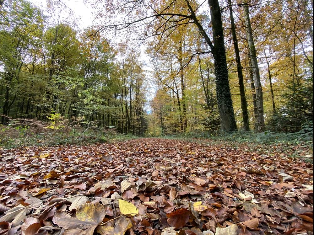 Mägenwilerwald Schwulenwald