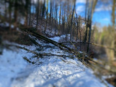 Viel Schnee und Chaos im Wald