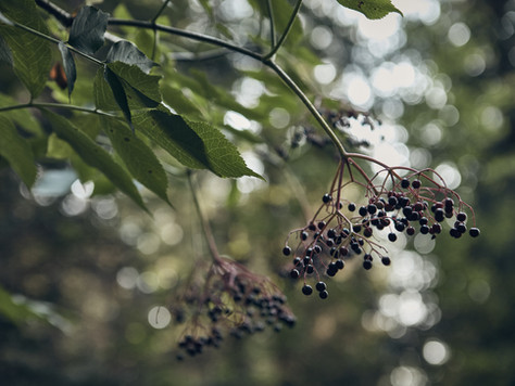 Mindful Foraging for Wild Foods, Medicines and Nature Connection