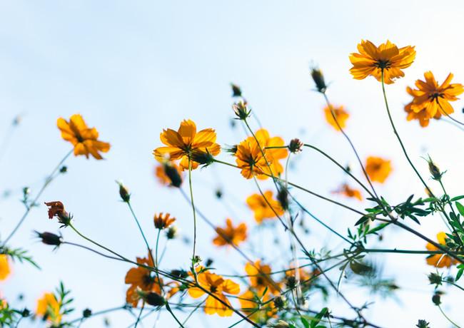 Frühling Blumen Naturkosmetik.jpg