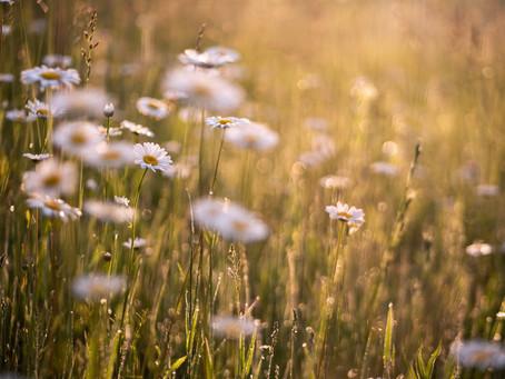 Frühlingskind Naturkosmetik