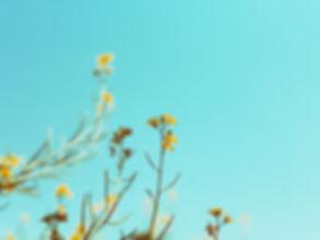 natrure ciel bleu