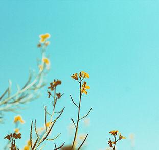 Frühling Branchen