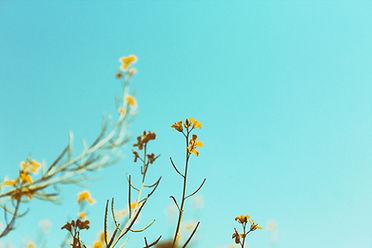 Весна Отрасли