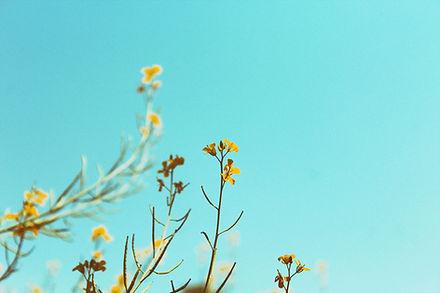 Rami di primavera