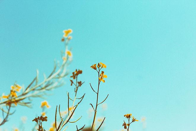 Branches de printemps
