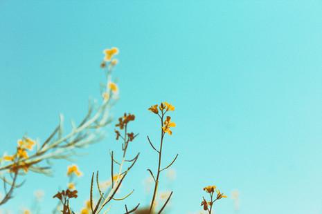Ramas de primavera