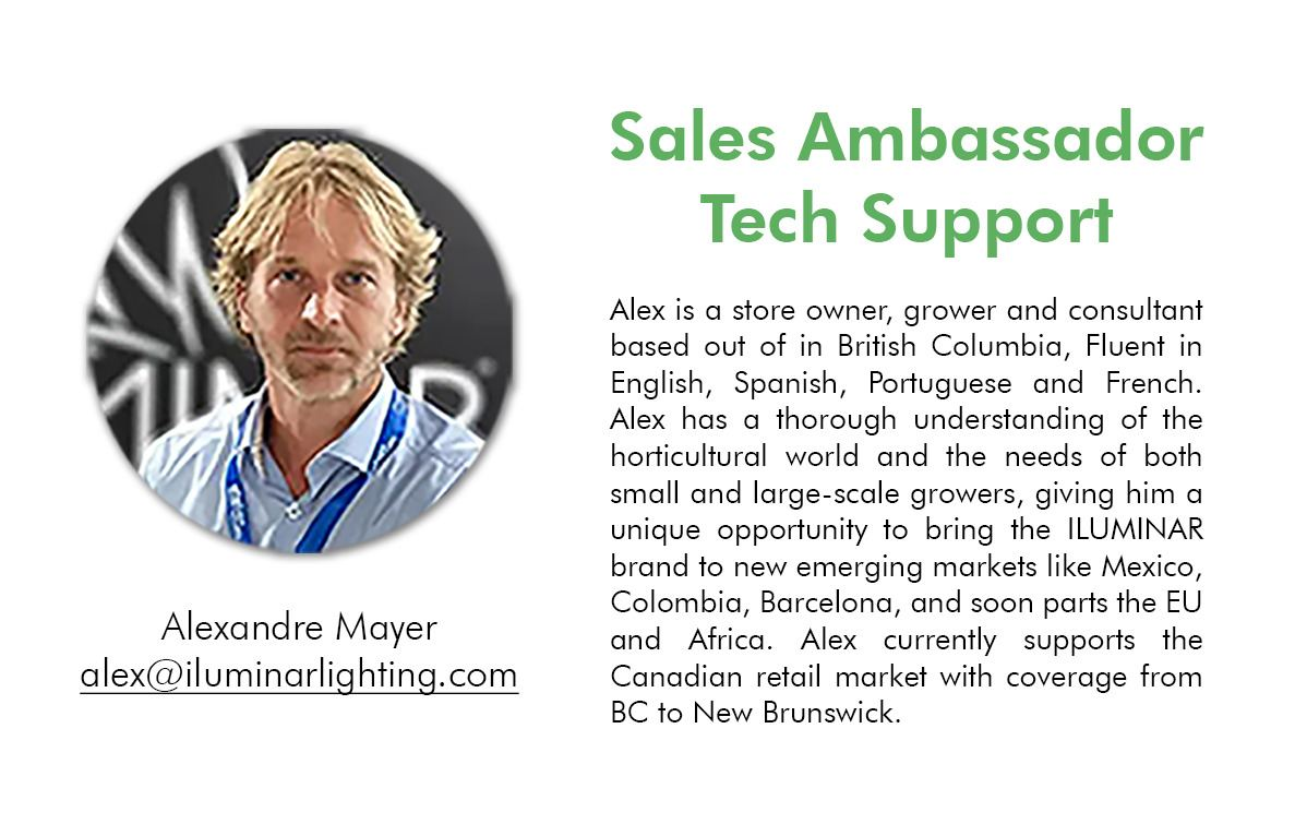 ILUMINAR-Sales-Representative-ALEXANDRE.