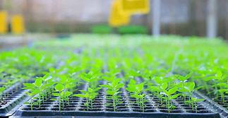 Plants Seedling Stage.jpg