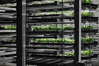 ILUMINAR Greenhouse Vertical