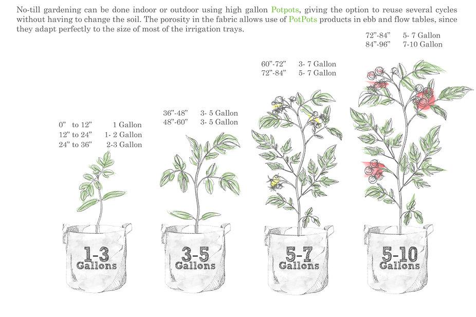 PLants sizes pot pot.jpg
