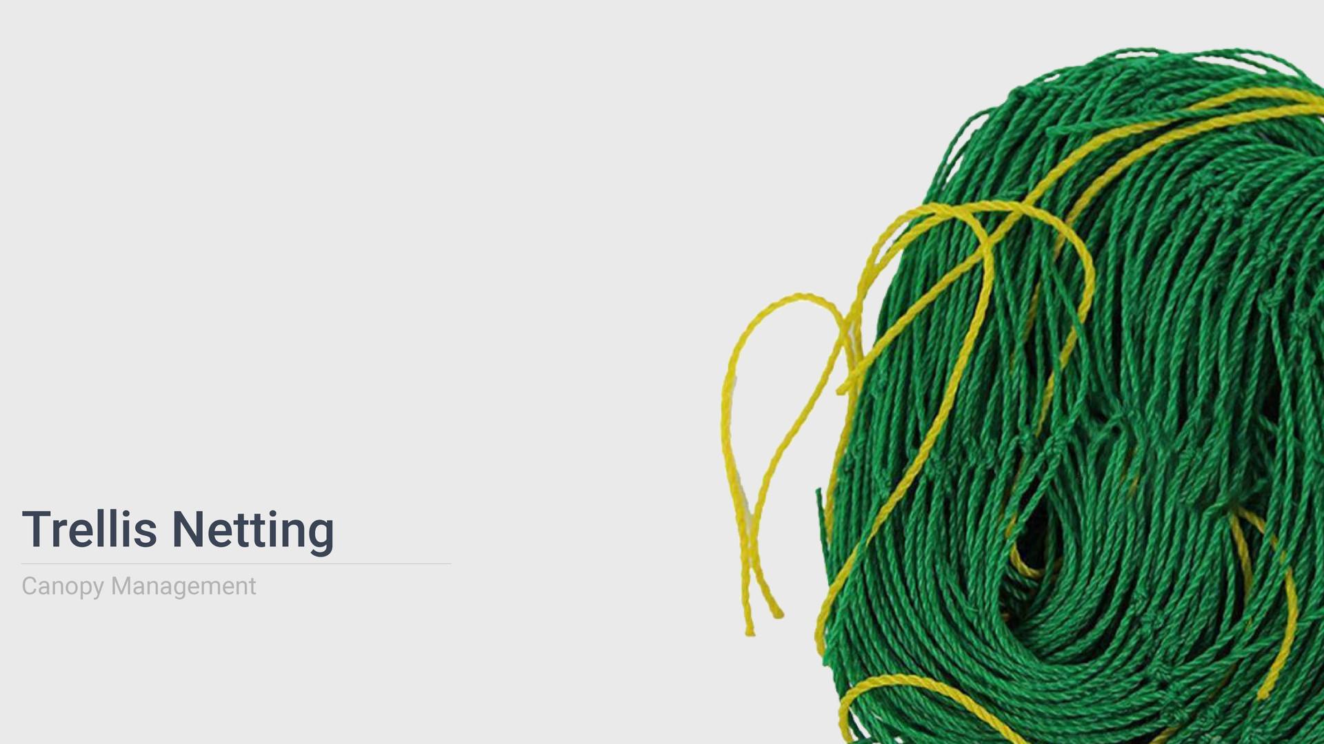 Tellis-Netting.jpg