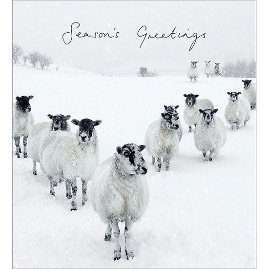 Charity Card Pack Sheep
