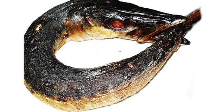 Traditional Food Africa Barracuda smoked