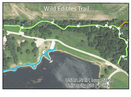 JCCB Wild Edibles Trail web.jpg