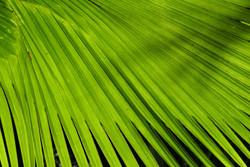 Palmenwald