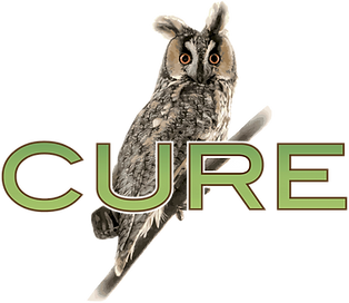 Cure Line Art Owl PNG.png