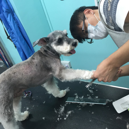5 Common Dog Grooming Mistakes Pet Owners Should Avoid