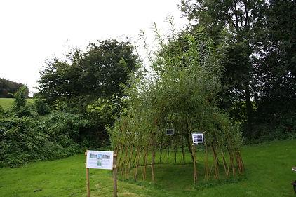 willow den.jpg