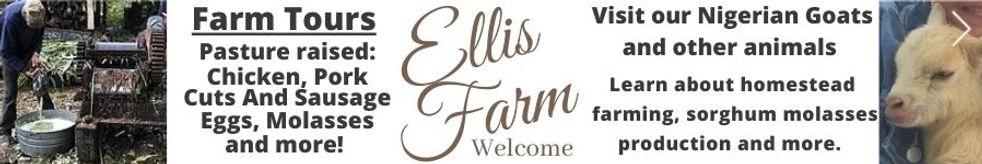 EllisSecondBanner.jpg