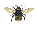 Just bee.png