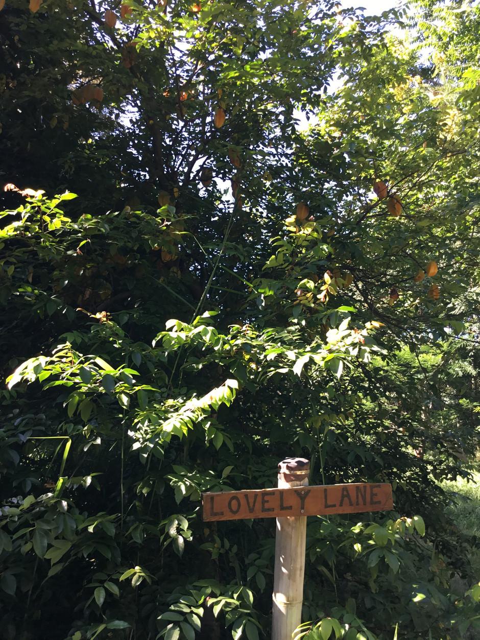 Take a walk down Lovely Lane