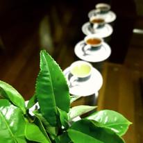 types of tea.jpg