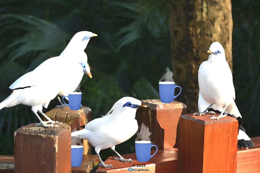 Bird Chat.jpg