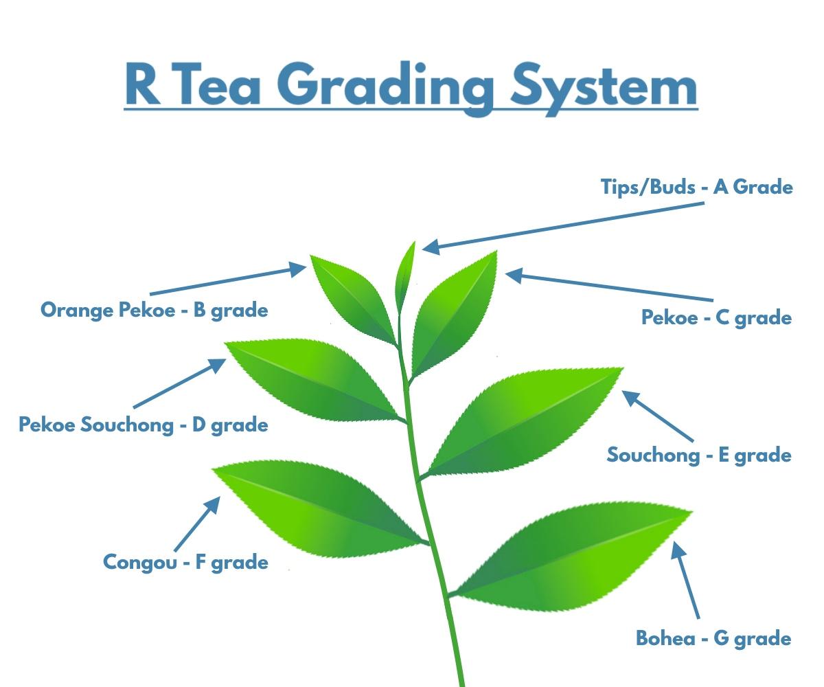 R Tea Grading System