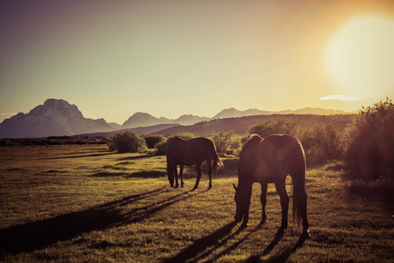 The Horses of the Tetons