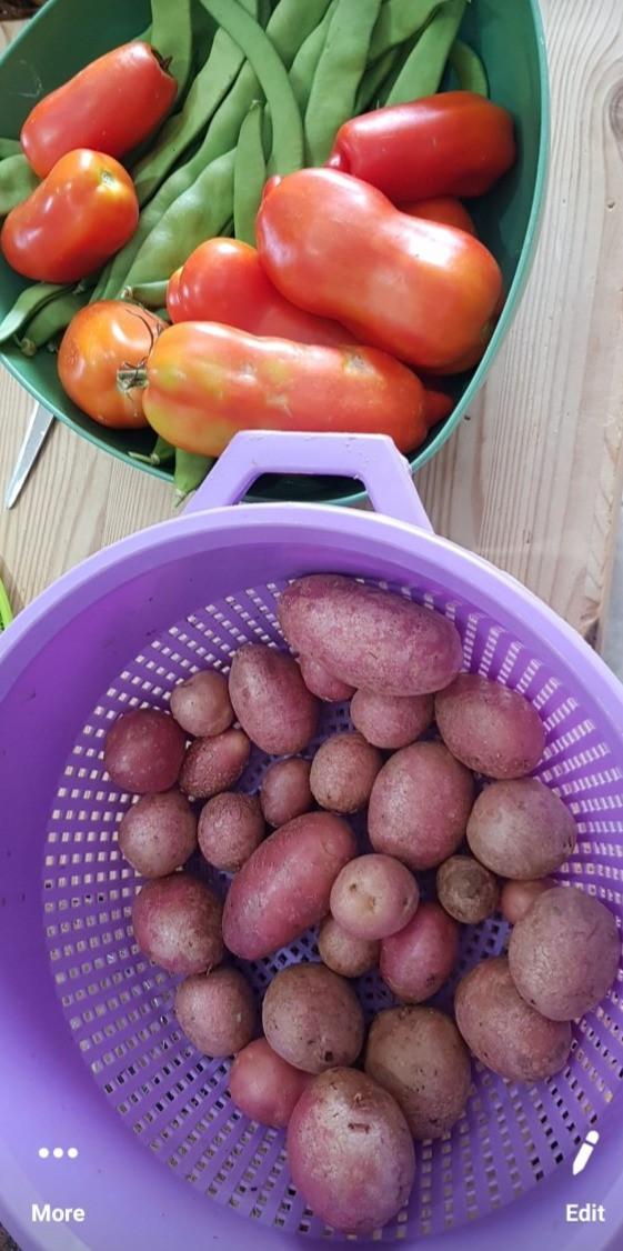 green berans tomatoes potatoes