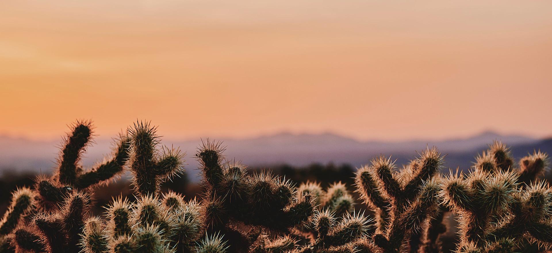 BG-Desert-Photo.jpg