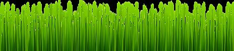 grass-strip-clipart-4.jpg.png