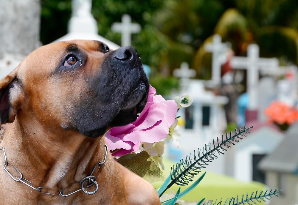 hundehalter verstirbt - wohin mit dem Hund