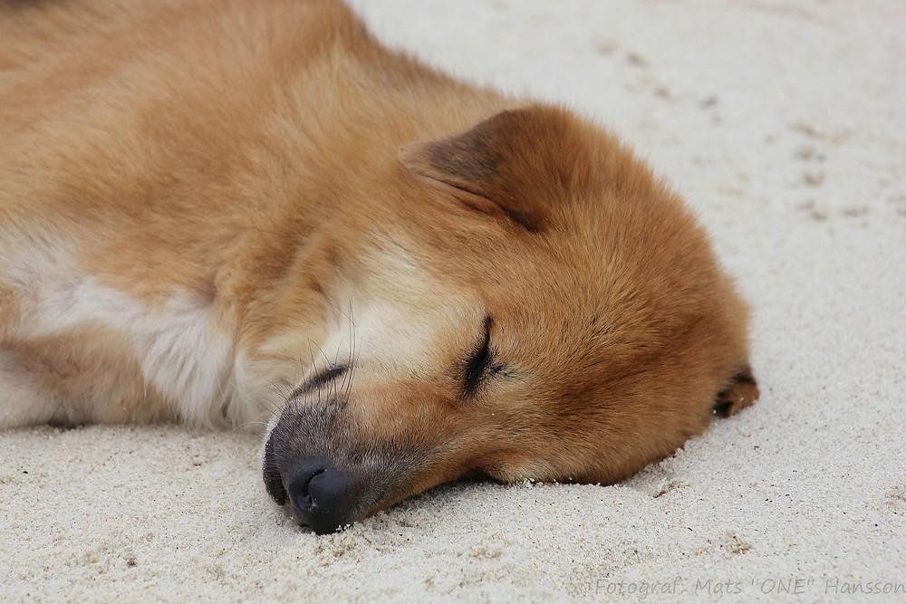 Hund liegt in der Sonne am Strand