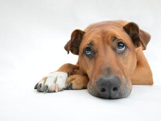 Hunde und Depressionen - wie hängt das zusammen?