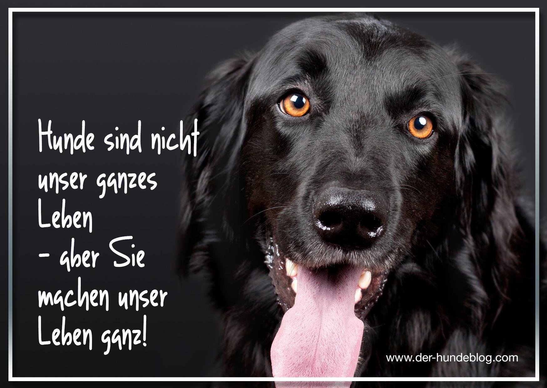 der-hundeblog-schoene-sprueche-hunde-11