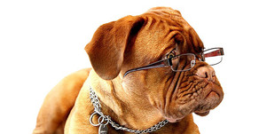 Kann Dein Hund denken?