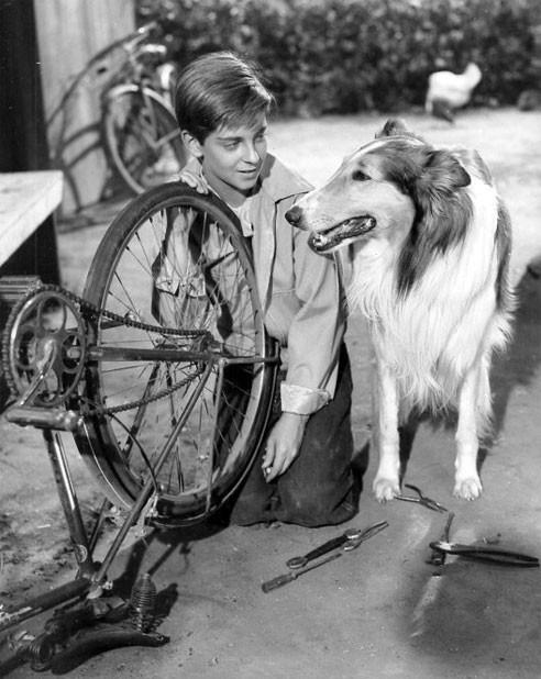 Lassie, berühmter Hund aus Film und Fernsehen