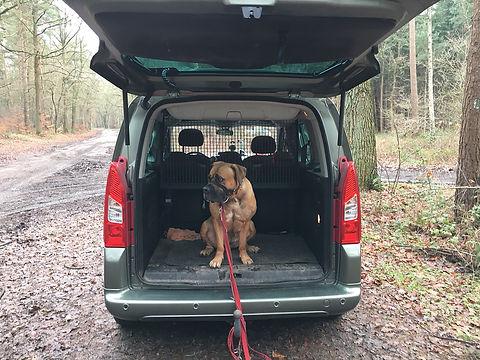 Citroen Berlingo mit Platz auch für zwei grosse Hunde